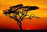 2010 Sunset tree painting