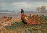 Archibald Thorburn The Sentinel painting