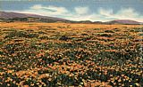 Claude Monet A Field of Californian Poppies painting