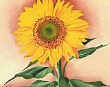 Georgia O'Keeffe A Sunflower from Maggie 1937 painting