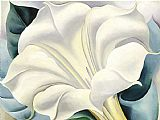 Floral paintings - White Flower by Georgia O'Keeffe
