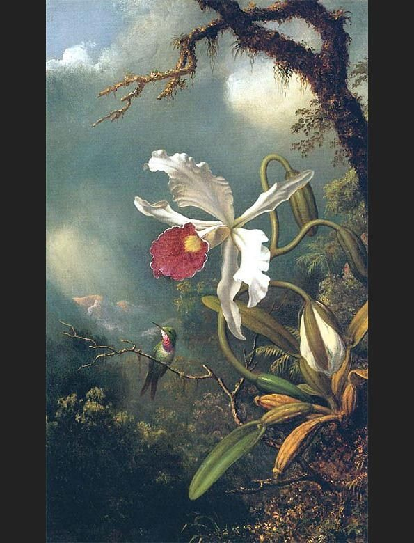 Martin Johnson Heade An Amethyst Hummingbird with a White Orchid