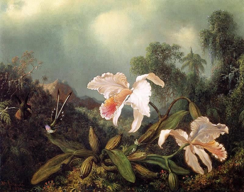 Martin Johnson Heade Jungle Orchids and Hummingbirds