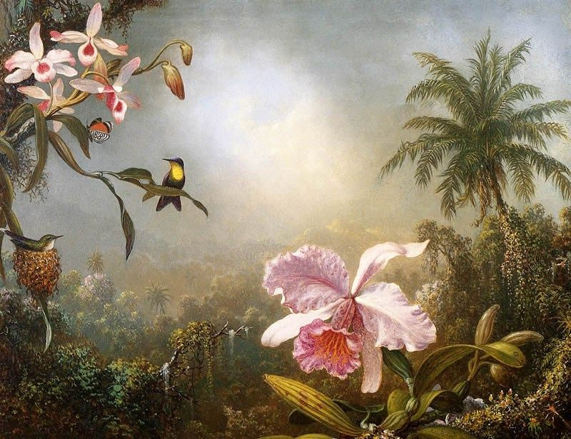 Martin Johnson Heade Orchids, Nesting Hummingbirds and a Butterfly