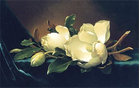 Martin Johnson Heade Two Magnolias and a Bud on Teal Velvet