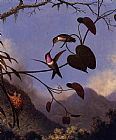 Martin Johnson Heade Amethyst Woodstar painting