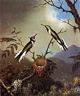 Martin Johnson Heade Hummingbirds at Their Nest - Sun Gems painting