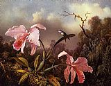 orchids and hummingbird Canvas Prints - Orchids and Hummingbird  2