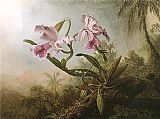 orchids and hummingbird Canvas Prints - Orchids and Hummingbird 1875