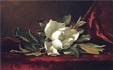 Martin Johnson Heade The Magnolia Blossom painting