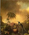 Martin Johnson Heade Thorn-Tail, Brazil painting