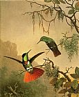 orchids and hummingbird Canvas Prints - Two Hooded Visorbearer Hummingbirds