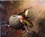 Martin Johnson Heade Two Ruby Throats by their Nest painting