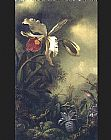 orchids and hummingbird Canvas Prints - White Orchid and Hummingbird