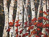 Maya Eventov Sleeping Maple painting