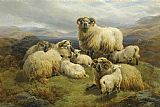 Unknown Sheep in the Highlands painting