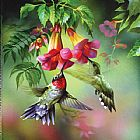 orchids and hummingbird Canvas Prints - hummingbirds