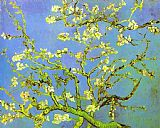 pear tree Paintings - Branches of Almond tree in Bloom