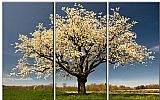 Landscape paintings - Blossom by landscape