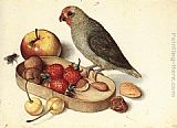 Georg Flegel Still-Life with Pygmy Parrot painting