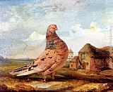James Ward A Fancy Pigeon painting