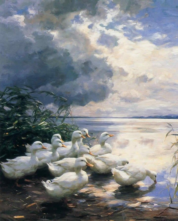 Alexander Koester Ducks in the Morning