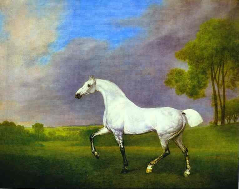 George Stubbs A Grey Horse