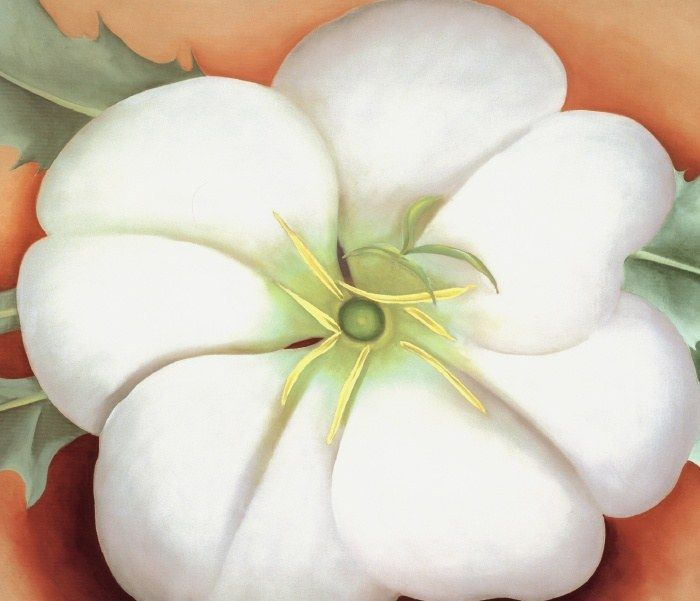 Georgia O'Keeffe White flower on Red Earth No. 1