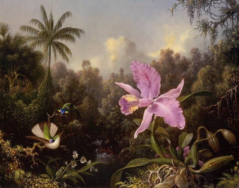 Martin Johnson Heade Orchid and Two Hummingburds
