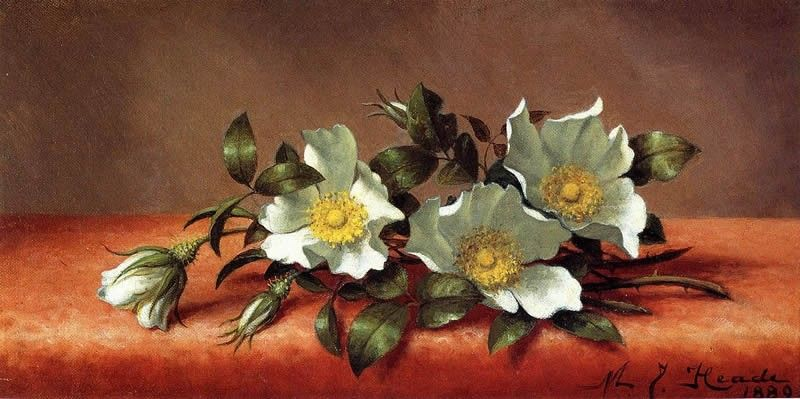 Martin Johnson Heade The Cherokee Rose