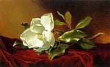 Floral paintings - A Magnolia on Red Velvet by Martin Johnson Heade